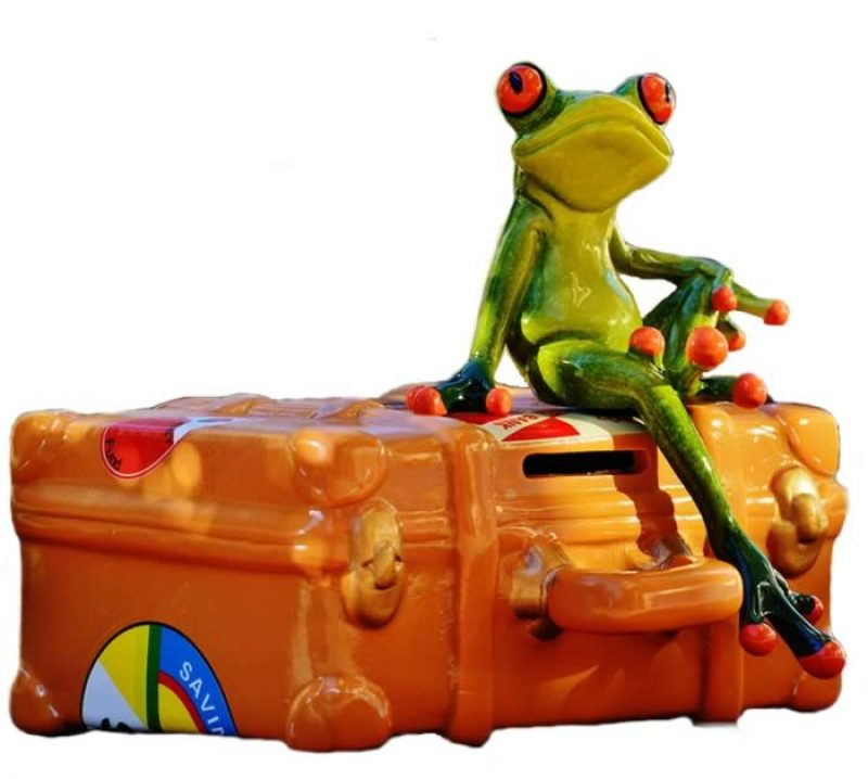 travel frog